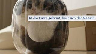 Bonsai-Katzen: Ein Fake aus dem Internet (Foto: Screenshot Facebook)