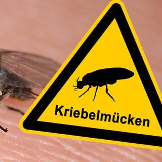 Die Kriebelmücke ist unterwegs - Warnschild (Foto: picture-alliance / Reportdienste, picture alliance/WILDLIFE, Adobe Stock/fotohansel)