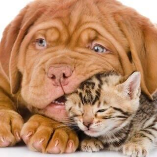 Hundewelpen mit Katzenjunges  (Foto: Adobe Stock / Ermolaev Alexandr)