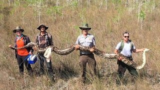 Forscher des Big Cypress Naturreservats mit der Riesenpython in der Hand (Foto: facebook/ Big Cypress National Preserve)