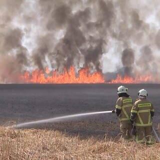 Feuerwehrleute löschen ein brennendes Rapsfeld. In Bingen unterstützen künftig die Winzer bei Löscheinsätzen(Symbolbild) (Foto: dpa Bildfunk, Picture Alliance)