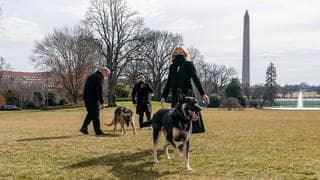 "Vorsicht: First Lady Jill Biden mit den Hunden ""Major"" (vorne) und ""Champ"". ""Major"" neigt zum ""Kneifen"". (Foto: picture-alliance / Reportdienste, picture alliance / ZUMAPRESS.com 